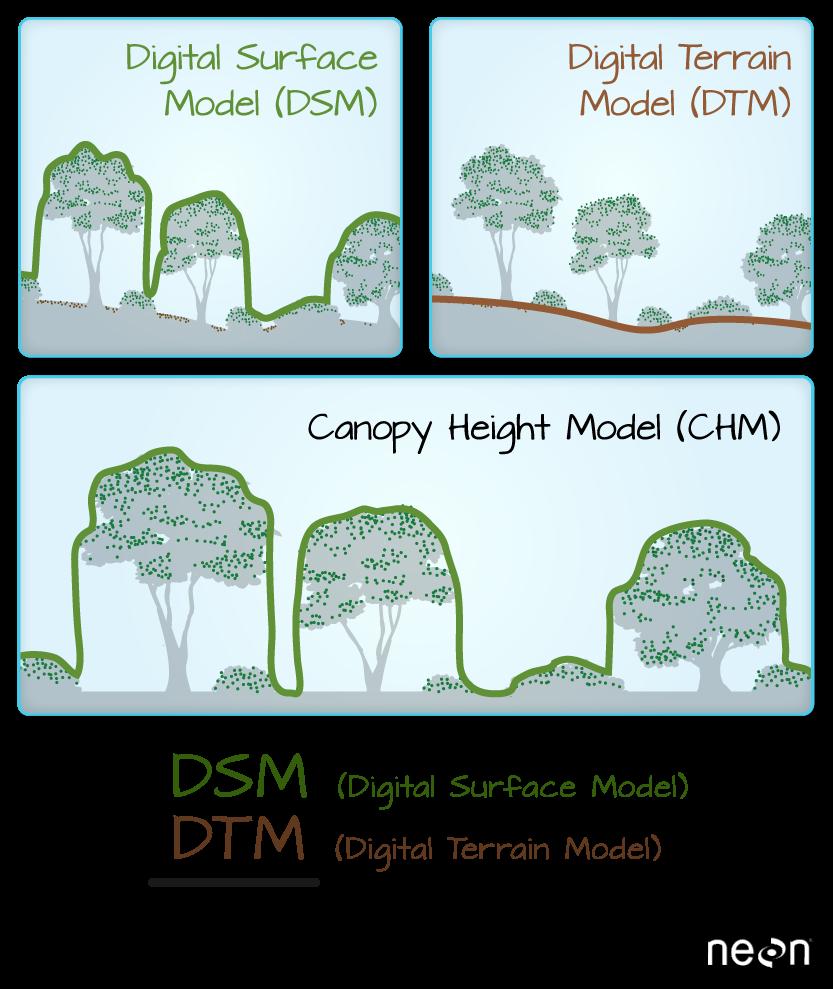 Lidar derived DSM, DTM and CHM.