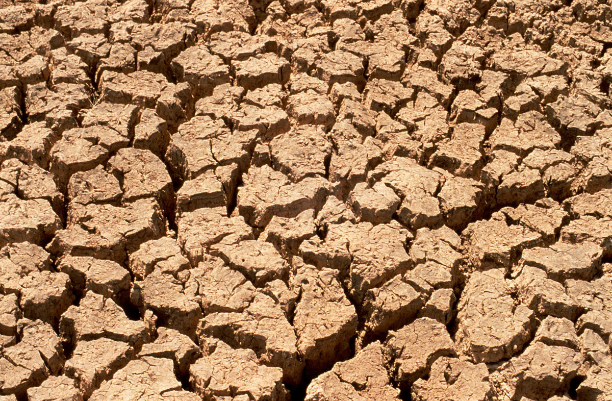Dry, compacted soil during a drought