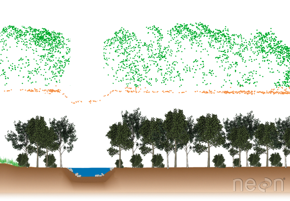 Example of a tree profile after a Lidar scan. Cross section showing LiDAR point cloud data (above) and the corresponding landscape profile (below)