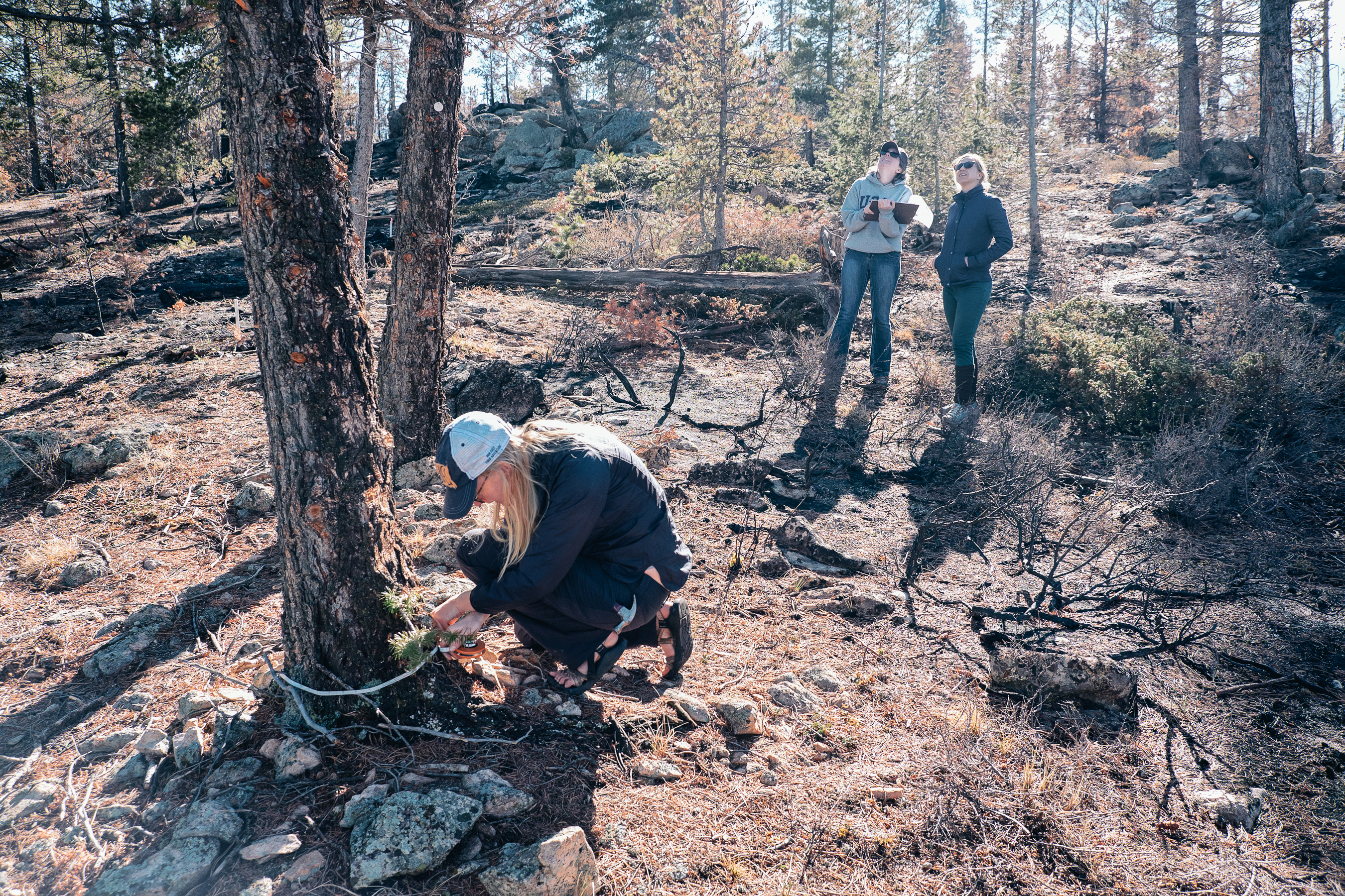 CU Boulder students perform fieldwork at the site of the Cold Springs Fire.